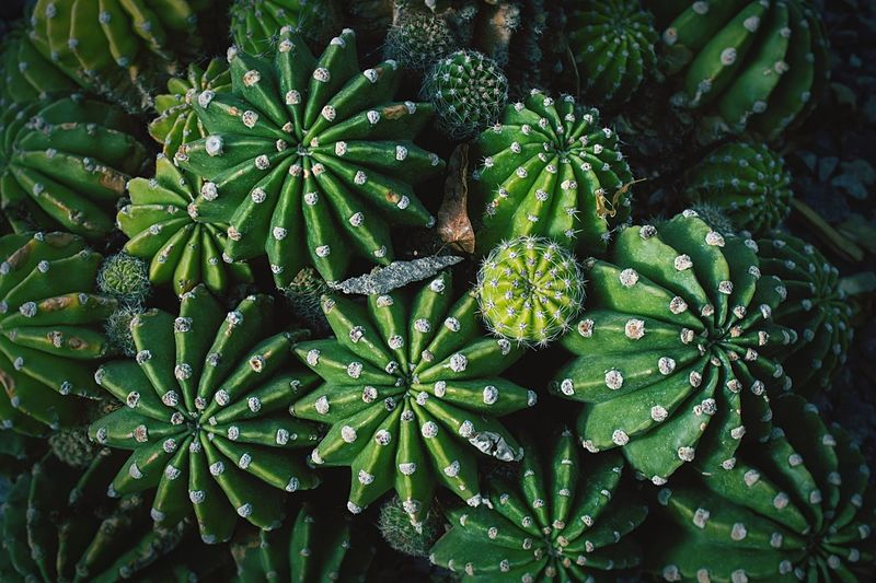 Abstract Green Color Freshness Plant Growth Green Color Beauty In Nature Plant Part Nature Full Frame Freshness No People Green Color Plant Plant Part High Angle View