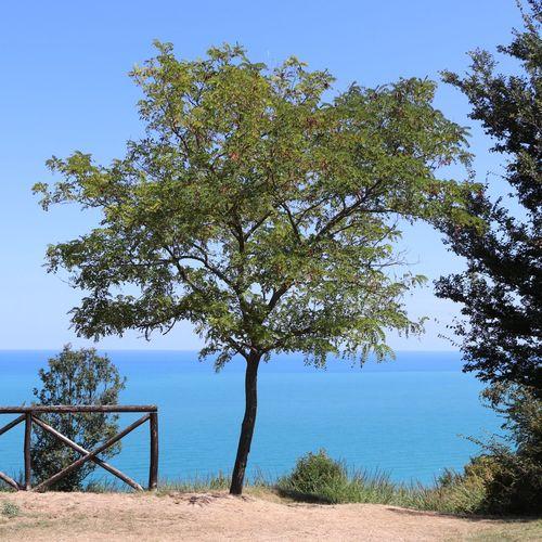 Tree Tree Water Sea Beach Clear Sky Blue Sky Horizon Over Water Coastline Calm Coastal Feature Ocean Seascape Coast