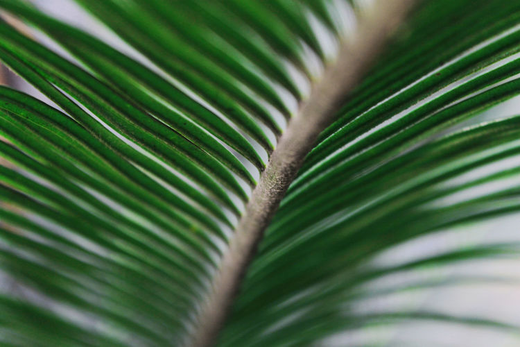 Backgrounds Beauty In Nature Blurry Close-up Day Detail Focus On Foreground Full Frame Green Green Color Growing Growth Leaf Lush Foliage Natural Pattern Nature Nautical Vessel No People Outdoors Palm Leaf Palm Tree Plant Selective Focus Tranquility