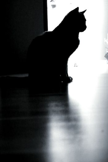 Cat Mycatisthebest Mycatisskrillero I Love My Cat ❤ Blackandwhite Photography