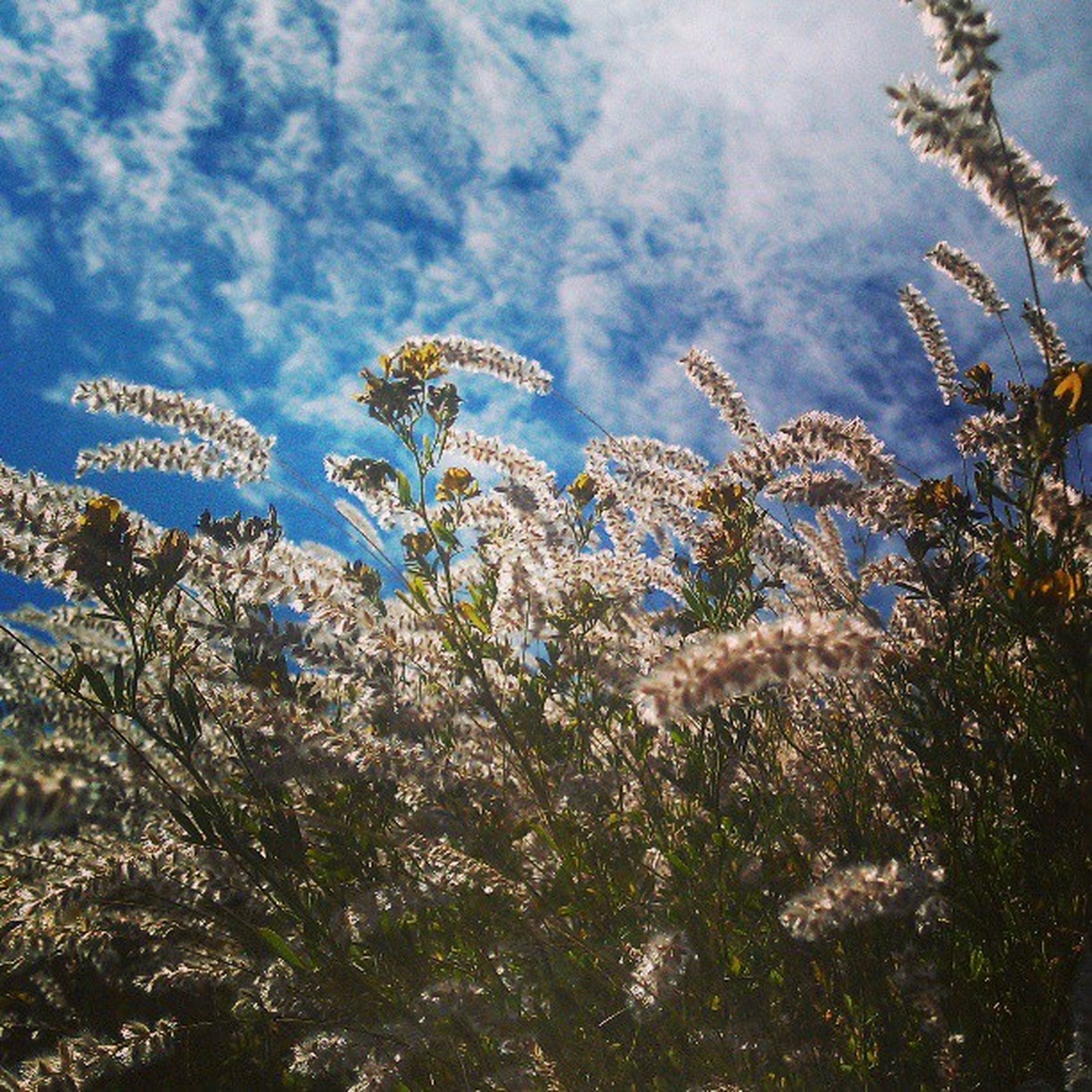 growth, sky, plant, flower, cloud - sky, nature, beauty in nature, tranquility, cloud, cloudy, growing, tranquil scene, day, low angle view, tree, field, blue, outdoors, fragility, no people