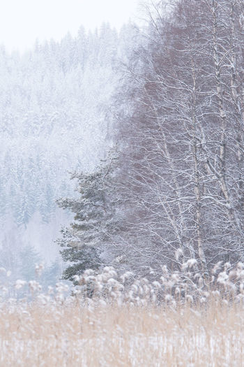 Beauty In Nature Close-up Cold Temperature Day Motion Nature No People Outdoors Tree Water Winter