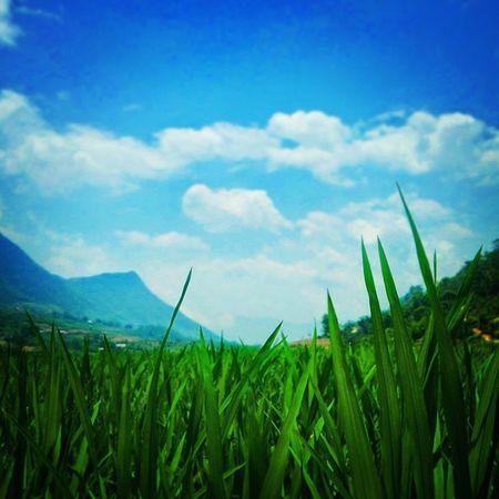 Young Rice Ricepaddies Sapa Trekking Picturesque Mountains Vietnam Travel