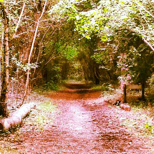 The Path To Where? Secret Places Secret Paths Secret Spot Gosport WoodLand Trees No People Beauty In Nature Tranquility Day Nature