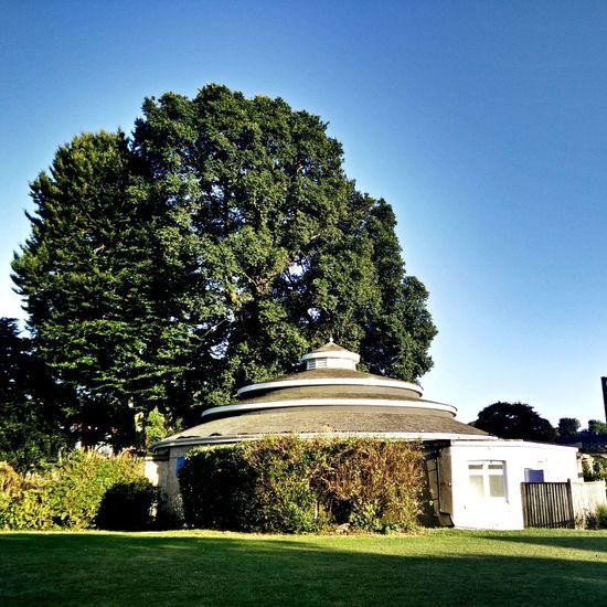 Elm Tree Ulme Habitus Summer Big Tree