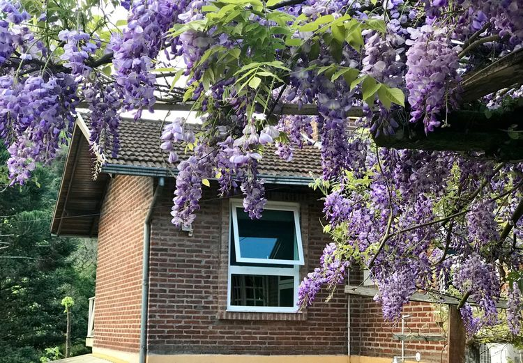 Spring frames... Flowers Frame Framed Glicine Glicinia Springtime Plant Flower Architecture Built Structure Flowering Plant Building Exterior Growth Building Purple Window No People House Freshness Nature Beauty In Nature