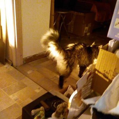 #instagramcats #catsagram #catsofinstagram #instacats #we_love_cats #mycat #caturday #catoftheday #кот #котэ #catz Videoofinstagram Video Catz котэ Caturday Mycat Catsofinstagram Instagramcats Catsagram Catoftheday кот Instacats Instavideo We_love_cats видео