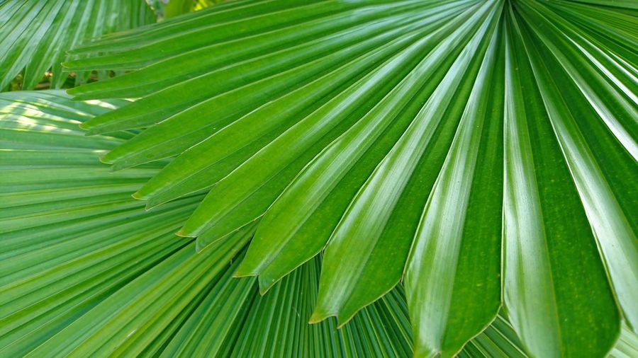Pattern on leaves
