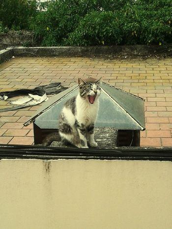 Hermosa! Simple Moments Cat♡ Villa Devoto Buenos Aires