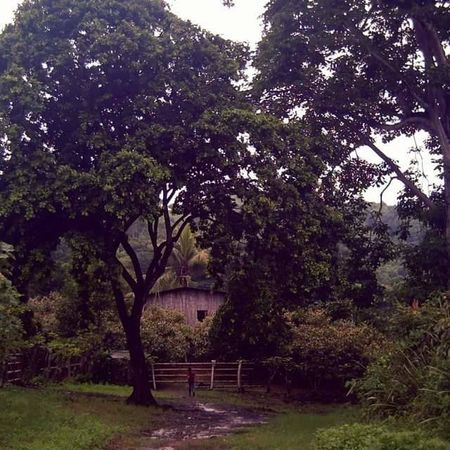 Ecuadorian farm Manabi Ecuador Ecuador Manabí Rainy Days Winter Nature Countryside