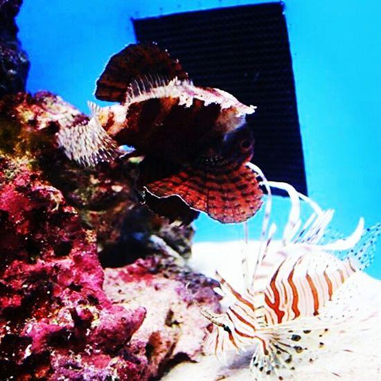Relaxing Taking Photos Enjoying Life Underwater Aquariumofthepacific Aquarium Aquamarine Undersea-world