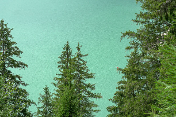 Trees in in front of Sylvenstein lake Sylvenstein Lake Evergreen Tree Treetop Coniferous Tree Copy Space Reservoir Turquoise Colored Green Nature Backgrounds Power In Nature Plant Water Clear Sky Green Color No People EyeEm Best Shots EyeEm Nature Lover EyeEm Selects Land Environmental Issues Minimalism