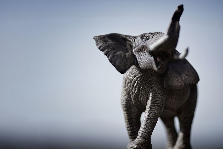 SCHLEICH Werbung - 100mm prime lense, f/2.8, 1/1600 sec., ISO 100 - Elephant African Elephant Animal Wildlife Animals In The Wild Schleich Toys Figuarts Figuart Toyphotography Toy Photography Schleich Animals Schleich Tiere