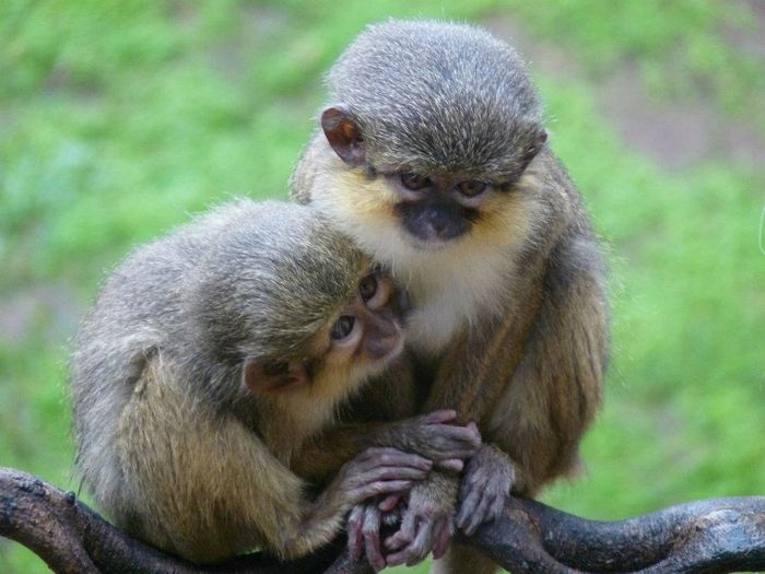 Love Is In The Air Love Taking Photos Check This Out EyeEm Gallery Monkey Zoo Affection No Filter EyeEm Best Shots