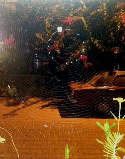#nofilter #anıyakala #örümceğin #yumurtaları 😯 #nofilter #anıyakala #engüzelkare #benimkadrajım #arşiv #trowbackthursday #tbt #bozburun #muğla #marincafe