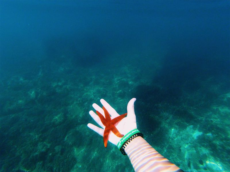 shot on gopro Water Human Body Part One Person Sea Body Part Holiday Nature Underwater Personal Perspective Human Hand Trip Vacations UnderSea Summer Hand Turquoise Colored Outdoors First Eyeem Photo