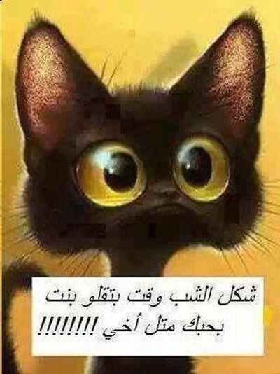 Jokes Hehehehe  هههههههههههههههههههههههه والله حلوة:-)