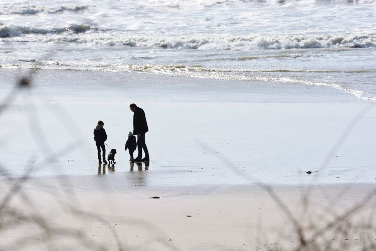Silhouette father with sons and dog at beach