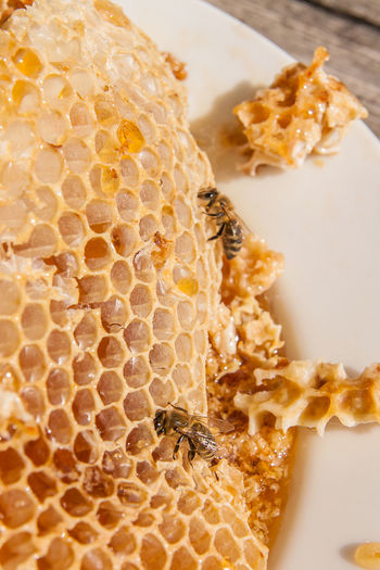Animal Animal Themes Animal Wildlife Animals In The Wild APIculture Beauty In Nature Bee Beehive Close-up Food Food And Drink Freshness High Angle View Honey Honeycomb Indoors  Insect Invertebrate No People Sweet Food