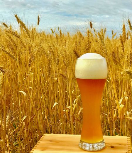 Beer Bier Wheat Beauty In Nature Close-up Day Drink Food And Drink Freshness Frothy Drink Growth IPhone7Plus IPhoneography Nature No People Outdoors Plant Sky Weizenbier Weissbier Wheatbeer