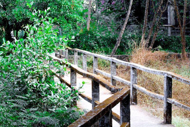 A bridge Garden