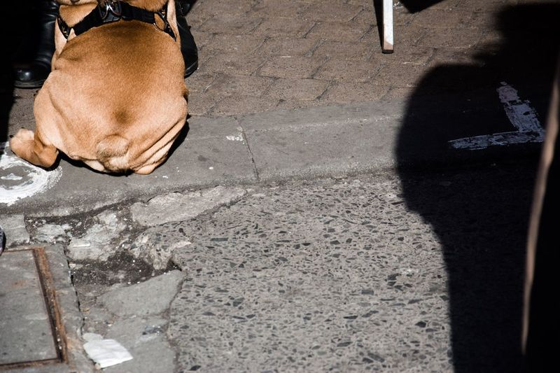 One Animal Real People Low Section Dog Day Domestic Animals Brown Mammal High Angle View Outdoors Sunlight One Person Shadow Men Pets Leisure Activity Human Leg Close-up Photography Streetphotography Street Photography Street Contrast