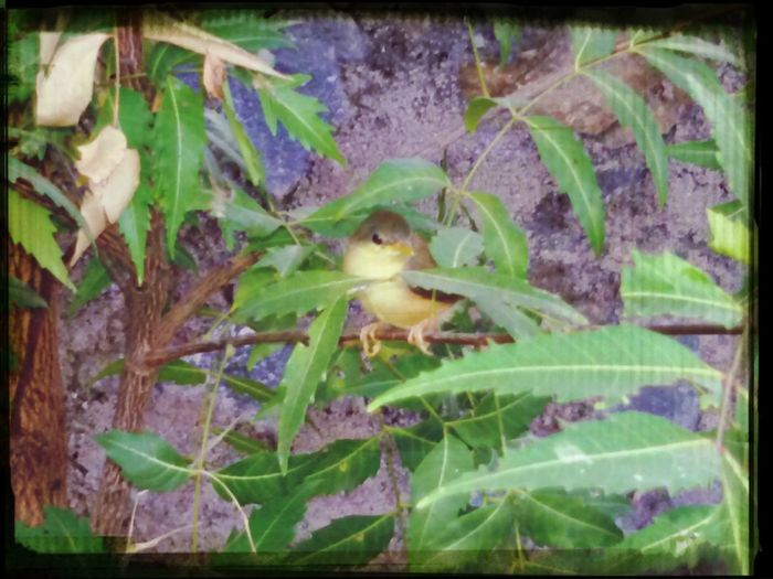 Smallest bird ever seen !! also the cutest ever.... :-* Walking Around Getting In Touch Relaxing