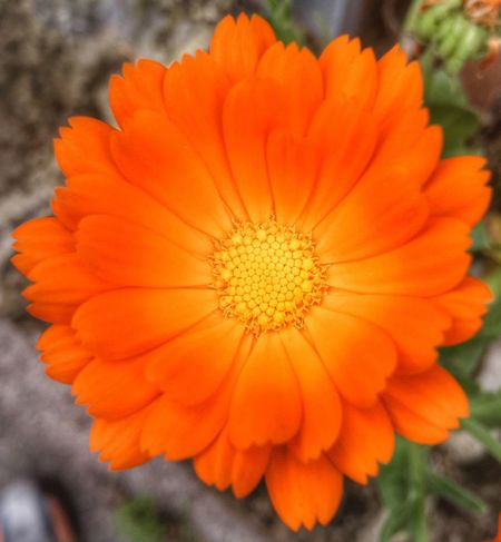 Stunning orange Flowers Flower Flower Collection Colors Colorful Nature Naturelovers Nature Photography Silhouette Life Spring Spring Flowers
