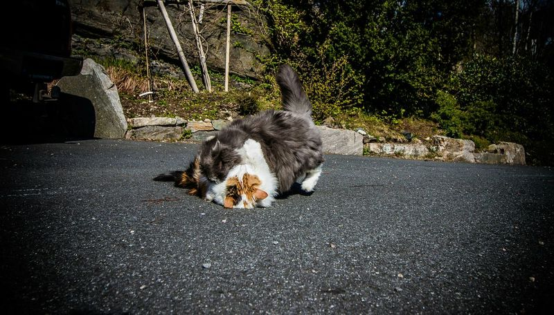 Cat Catfight Summer Action Photooftheday