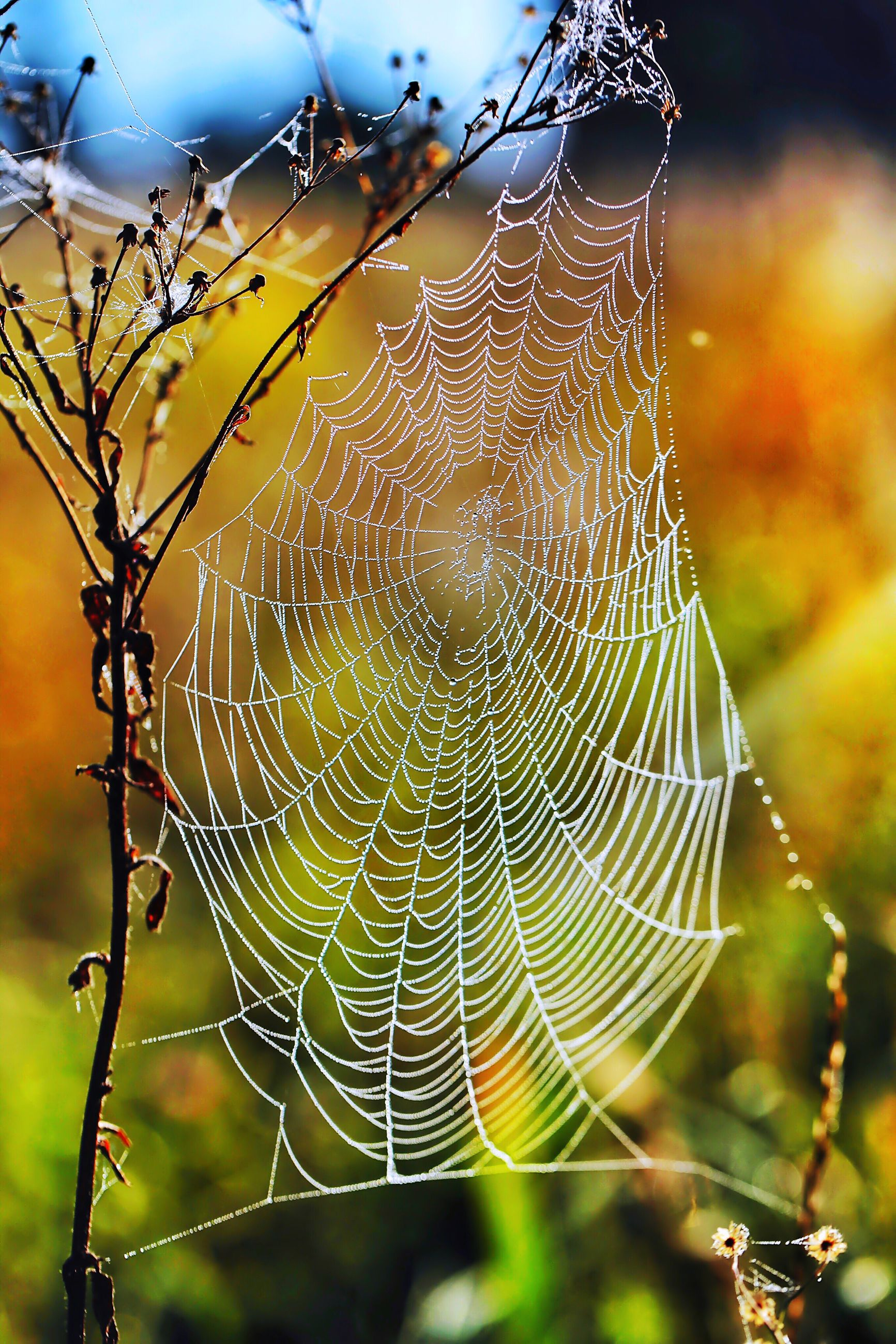 spider web, fragility, natural pattern, close-up, wet, drop, focus on foreground, water, nature, dew, pattern, detail, complexity, stem, beauty in nature, intricacy, plant, day, freshness, animal markings, outdoors, cob web, botany, extreme close-up
