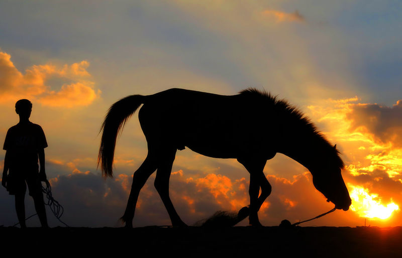 Silhouette man with horse standing against sky during sunset