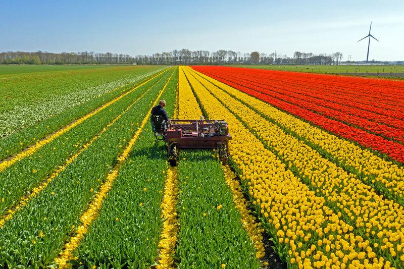Farmer with machinery working in flower field