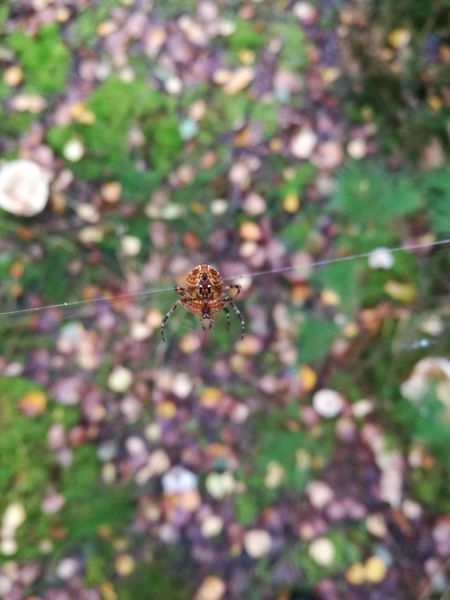 One Animal Animal Themes Insect Animals In The Wild Day Spider Outdoors No People Nature Close-up Animal Wildlife Flower