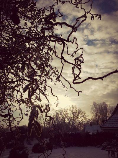 Sun Nature Sonne Winter Photography Schnee Fotografie Pics By Mr_badabing
