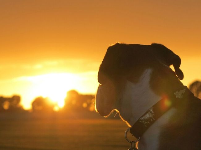 Sunset Nature Dog Colors Dogs SweetLe Priceless
