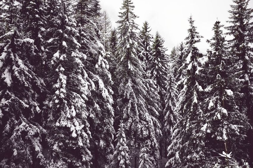 Tree Nature Growth Beauty In Nature No People Low Angle View Sky Tranquility Scenics Outdoors Day Dolomites, Italy Season  Wintertime Snow ❄ Travel Nature Miles Away Weather Remote Location Cold Temperature Snowfall Patterns In Nature Repetition Pine Trees