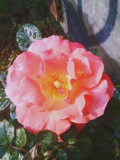 🌹⛅ Flowers