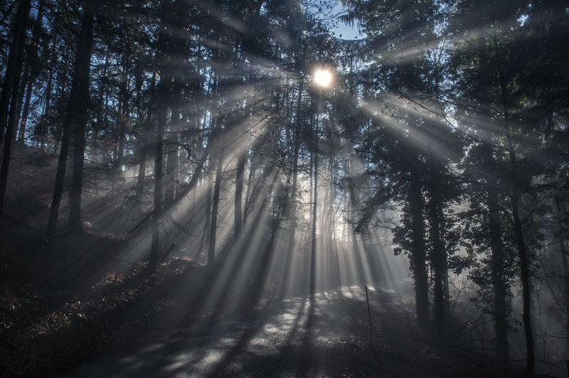 Beauty In Nature Bright Day Environment Fog Forest Forest Photography Growth Land Nature No People Non-urban Scene Outdoors Plant Scenics - Nature Streaming Sunbeam Sunbeams Sunlight Tranquil Scene Tranquility Tree WoodLand Capture Tomorrow It's About The Journey