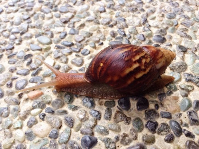Slowly but surely Snail