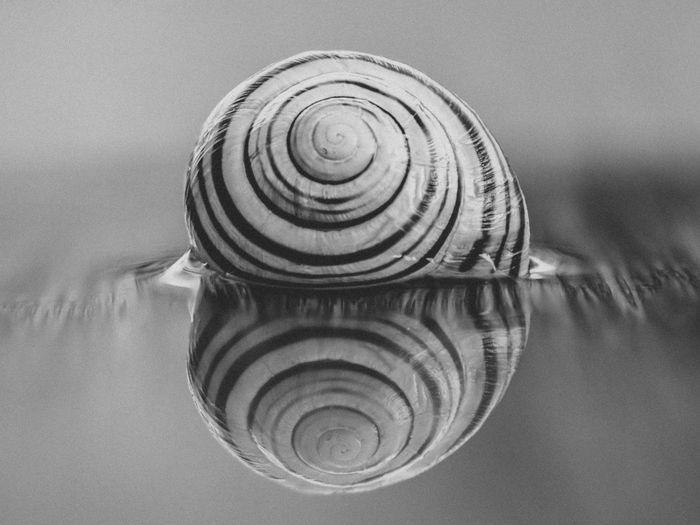 Macro Photography Reflection Snail Animal Themes Close-up Day Macro Macro Snail Nature No People Outdoors Snails Snail🐌 Spiral