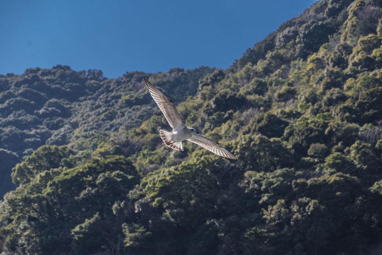 Bird flying over mountain against clear sky