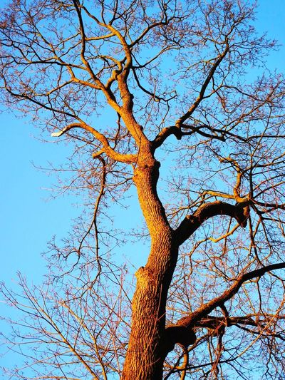 Tree Tree Trunk Branch Nature Low Angle View Sky Beauty In Nature Outdoors Bare Tree Scenics Tranquility No People Day Dead Tree Spreading Single Tree
