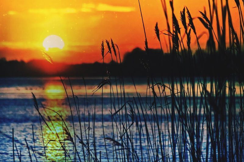 Hello World Good Times Like Summer Sun Sunset Lake Happy Water Reeds
