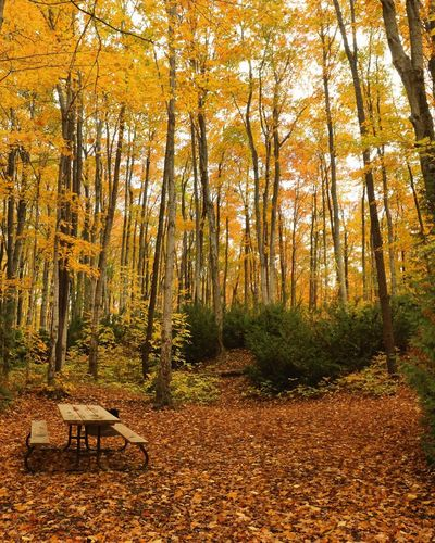 The season of Love Canonphotography Camping Colors Landscape Canon Ontario Canada Brucepeninsula Fall Beauty Fall Colors Fall Colours Fall Tree Land Forest Autumn Tranquility Beauty In Nature Nature Scenics - Nature