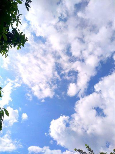ท้องฟ้า Tree Blue Backgrounds Multi Colored Sky Cloud - Sky EyeEmNewHere