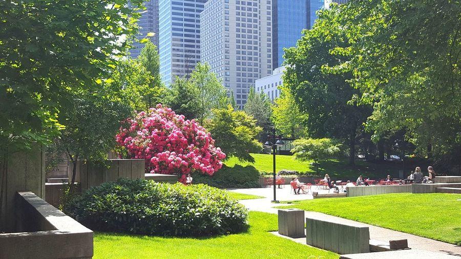 Flowering trees in park against buildings in city