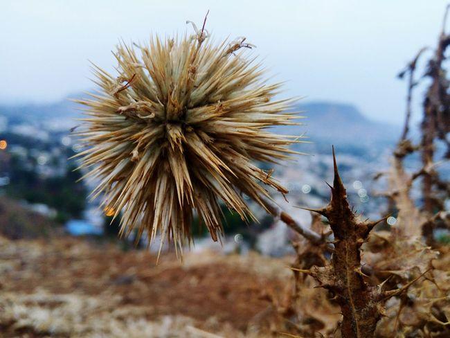Nature Amazing Nature Dried Plant Summer Waiting For The Rain Natureshots