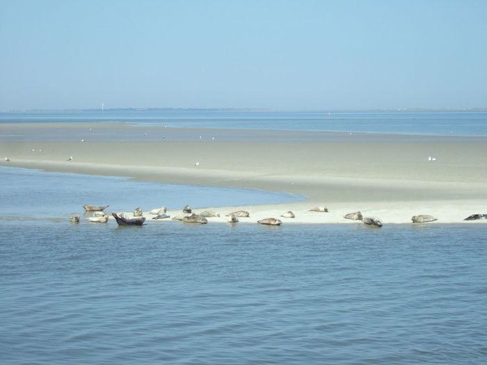 Sea dog benches