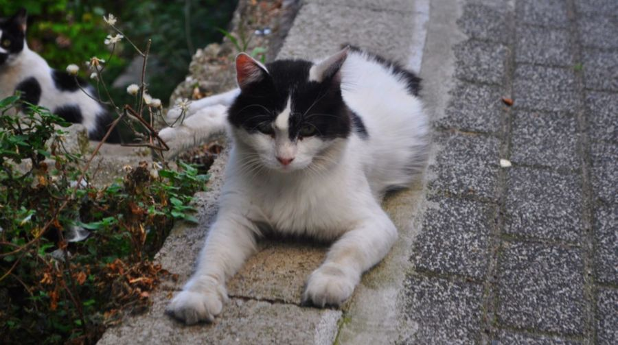 Enough, i am seriously angry now !! Pets One Animal Domestic Animals Animal Themes Domestic Cat Cat Mammal Feline Full Length Close-up Whisker Zoology Alertness Animal Day Curiosity Outdoors Footpath Laziness No People Angry Pet Photography  Cat Lovers Animal Photography