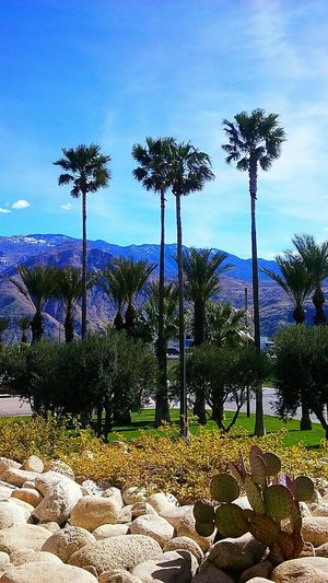 Palm Tree Growth Tree Blue No People Outdoors Cloud - Sky Nature Sky Day Beauty In Nature Cabazon Southern California Lifestyle Southern California